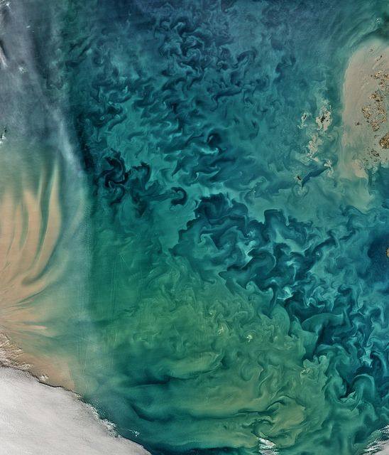 Close-up of a satellite photo of the Yellow Sea like giant tonal computer-generated fractals.