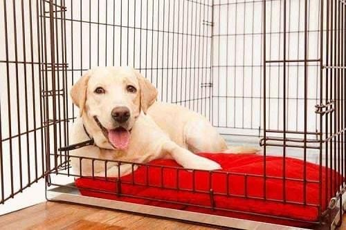 Best Dog Crate Reviews For A Snuggly Den Kennel Training A Puppy