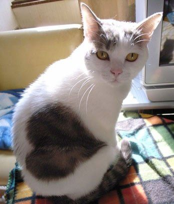 picture of cat with heart So beautiful and so sweet. Signing off for tonight. Have fun pinning.  Thewitchescircle