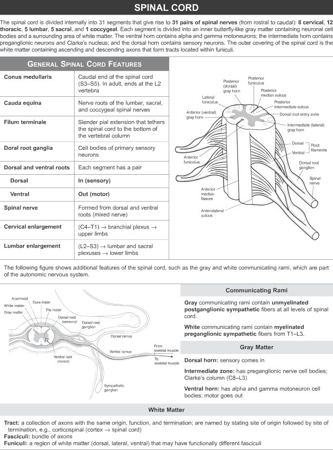 155 besten KAPLAN QBANK NEURO Bilder auf Pinterest | Anatomie ...