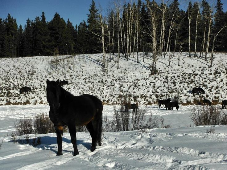 Wild Horses in the Mountains.