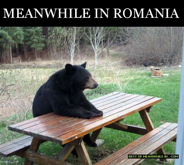 meanwhile-in-romania-bear-at-the-table
