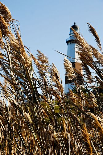 beautiful 'sea oats' in front of a light house in Montauk, Long Island, USA