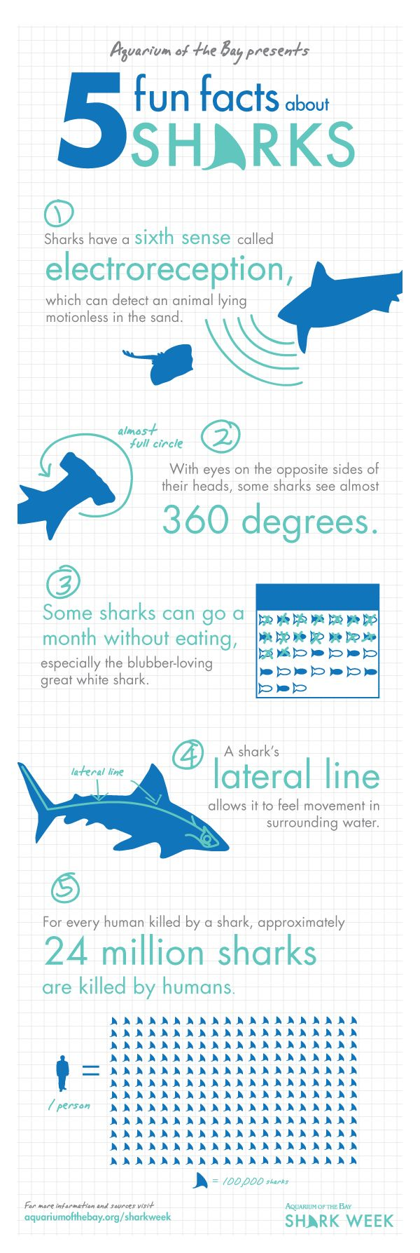 5 Fun facts about Sharks.    Shark Week at the Aquarium. All shark, all day, all week.