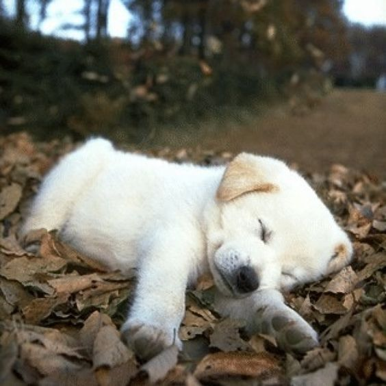 Love the fall leaves....how cute is that!!!: