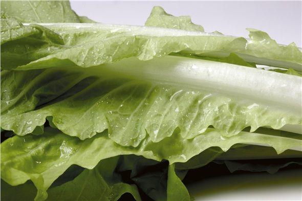 Lahana: Düşük kalorili, A, B ve C vitaminleri açısından zengin, bol posa içeren lahananın ayrıca tohumları da idrar söktürmeye yardımcı olur.