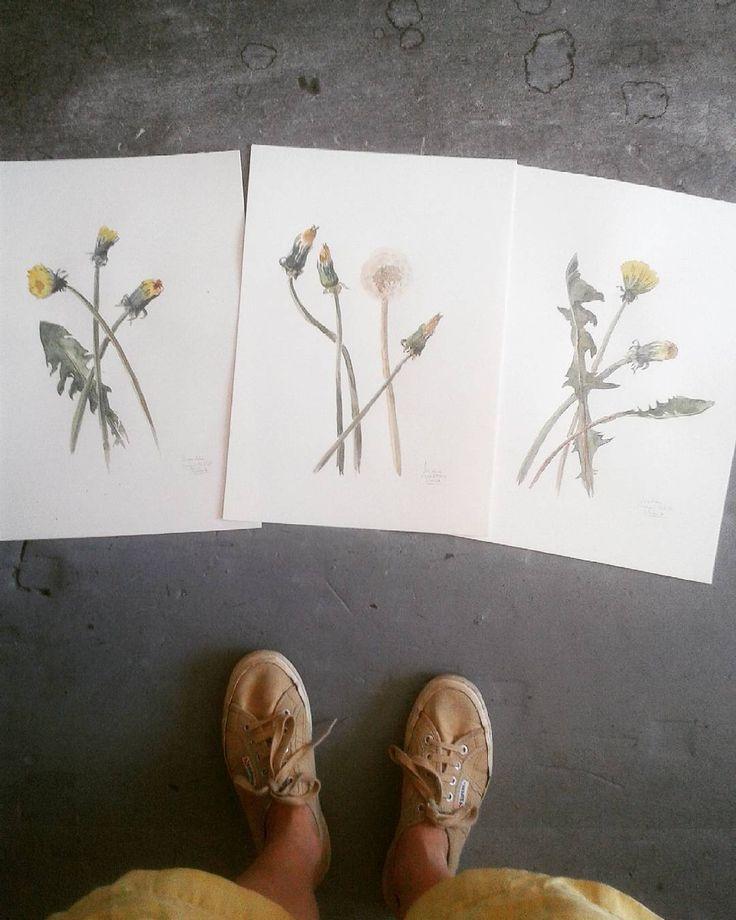 Dandelions x 3 Dientes de León x 3 #dandelion #dientedeleon #löwezahn #botanicalillustration #watercolours #watercolor #setofthree #botanicalart #botanicalartist #draweveryday #flowery #wildflowers #artiststudio #workinprogress #frankfurt #catilustre
