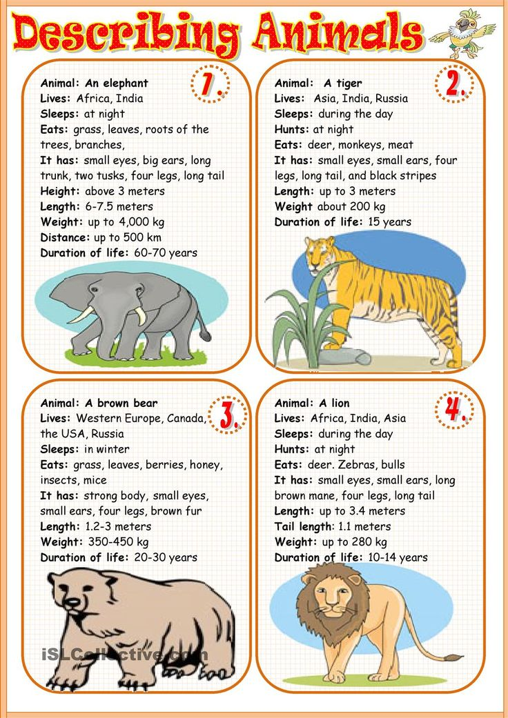 Describing animals 1 - students write a short description using the factfile