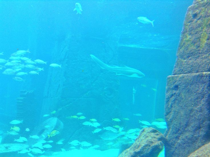 #shark #tiburon #fish #peces #pez #fishes #ocean #oceano #mar #sea #ruins #ruinas