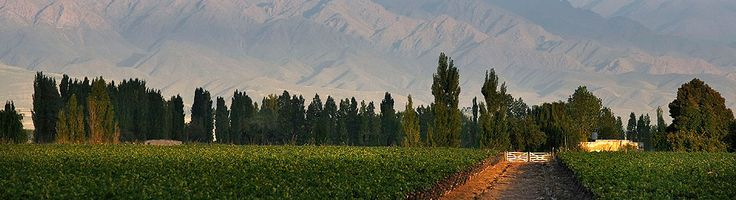 La Consulta vineyard in the district of San Carlos, Mendoza (Uco Valley).