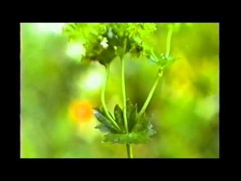 Conoscere le piante medicinali: Alchemilla - Valerio Sanfo - Naturopatia - YouTube
