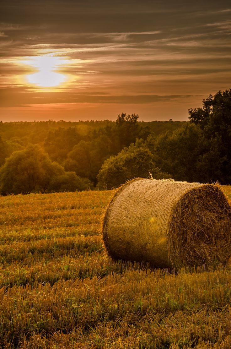 Harvest by Tomasz Tomczak on 500px