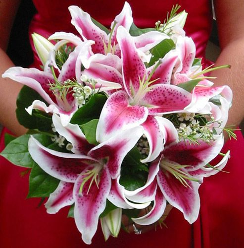 bridal bouquet with star gaizer lillies | Bridal Bouquet | Wedding Florist San Diego | FloralAtmo