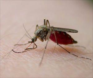 Mumbai Municipal Corporation Issues Notice to Celebrities Over Mosquito Breeding Premises