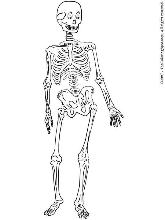 skeleton coloring pagesskeletonprintablecoloringpages