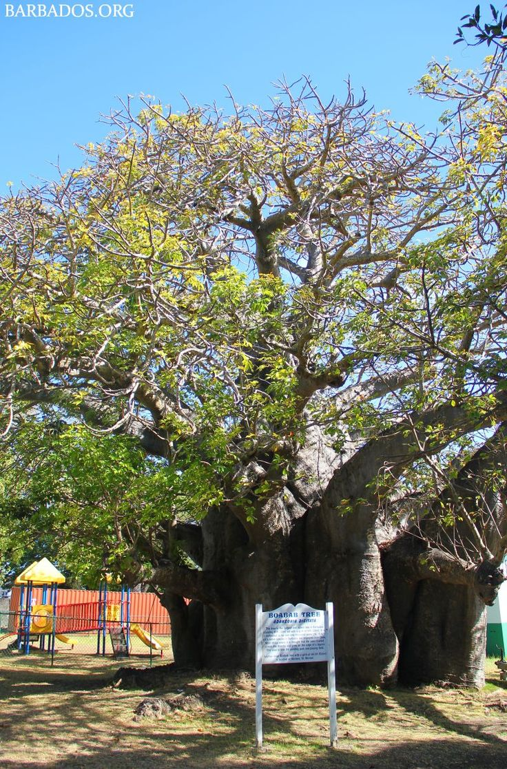 Be sure to spend a while in Queen's Park in Bridgetown the capital city of #Barbados