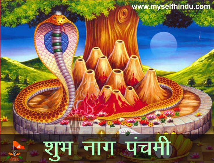 May Lord Shiva Bless you and your family on the auspicious occasion of Nag Panchami. Shubh Nag Panchami!