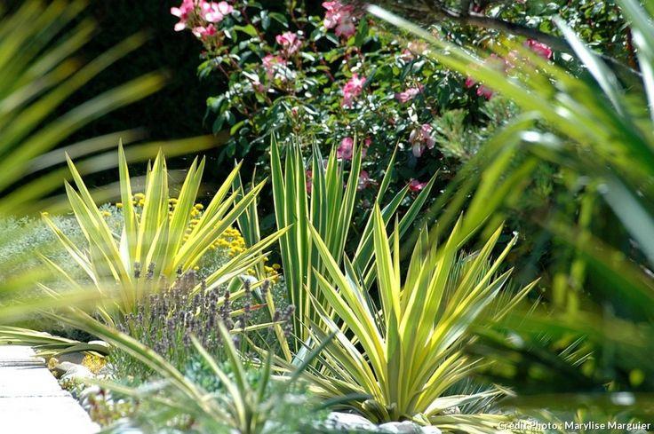 Les 10 meilleures images du tableau plantes exotiques sur for Yucca plante exterieur