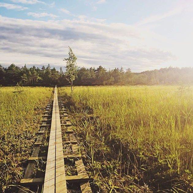 Kurjenrahkan kansallispuisto, Varsinais-Suomi. Kiitos kuvasta @lauhiso! #suomi #finland #mondolöytö #mondolehti