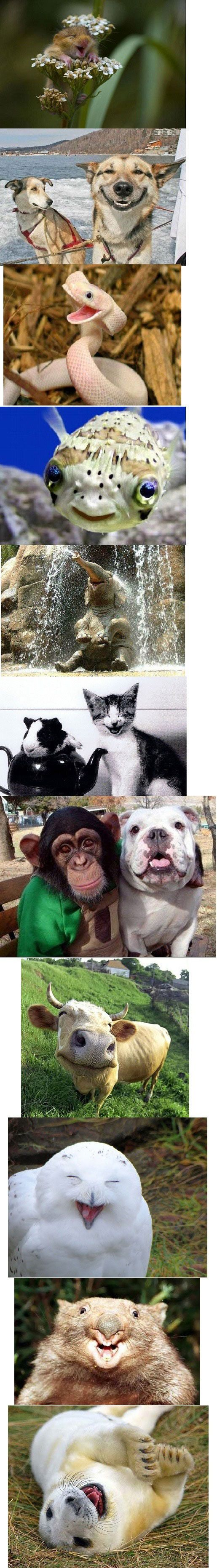 Animales felices.