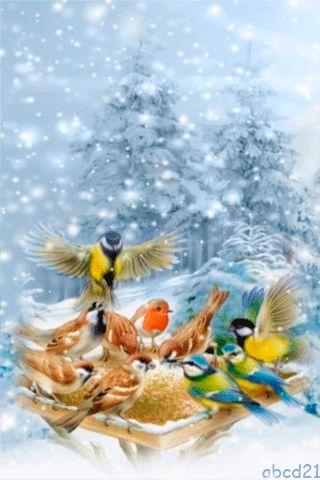 <3 A Christmas dinner for the birdies! <3