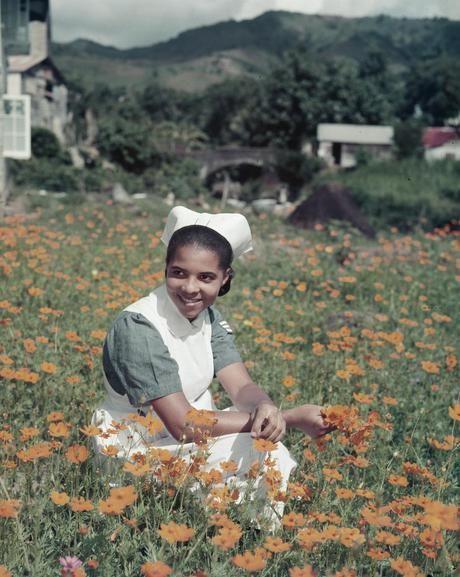 NURSING ST VINCENT WINDWARD ISLANDS MARCH 1955 (TR 7109) | Nurse Elsie Sandy picking cosmos flowers outside the nurses' hostel in the grounds of the Colonial Hospital on St Vincent. Nurse Sandy, who is 21, comes from Canouan, one of the Grenadine dependencies of St. Vincent, and is in charge of the childrens' ward of the hospital.