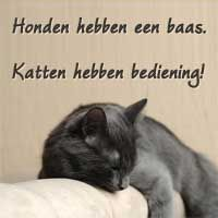 SPREUKEN-- Dogs have a master, Cats have servants.