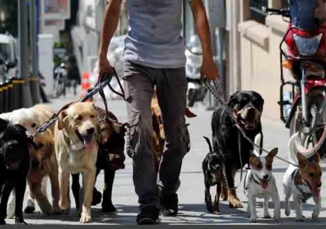Prohíben venta de perros en tiendas de mascotas en Miami https://link.crwd.fr/enJ