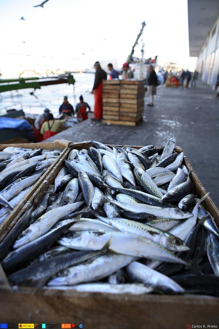 Los pescados | Turismo de Vigo