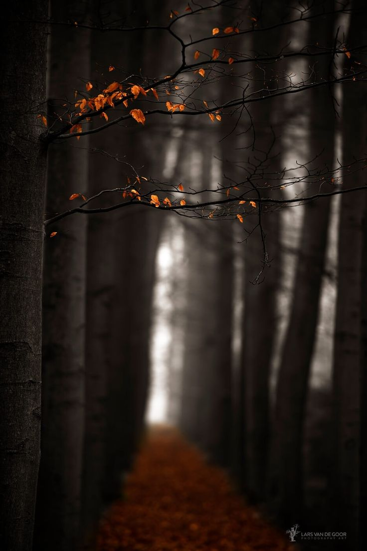"Last Leaves II - Watch on black to touch the leaves <a href=""https://www.instagram.com/larsvandegoor/"">| INSTAGRAM |</a><a href=""http://larsvandegoor.com/"">| WEBSITE |</a><a href=""https://www.facebook.com/LarsvandeGoor?ref=hl"">| FACEBOOK |</a>"