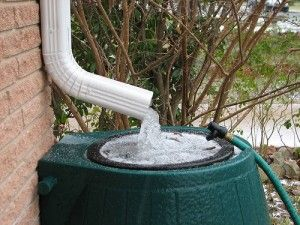 How to keep mosquitos out of your rain barrel.