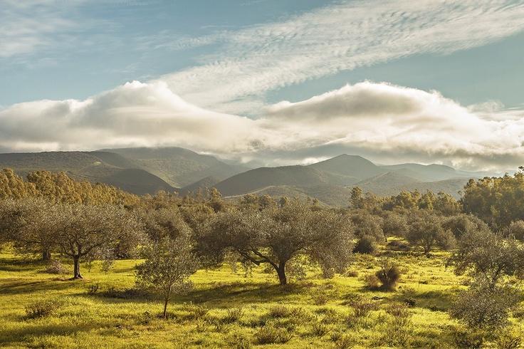 Monti degli ulivi
