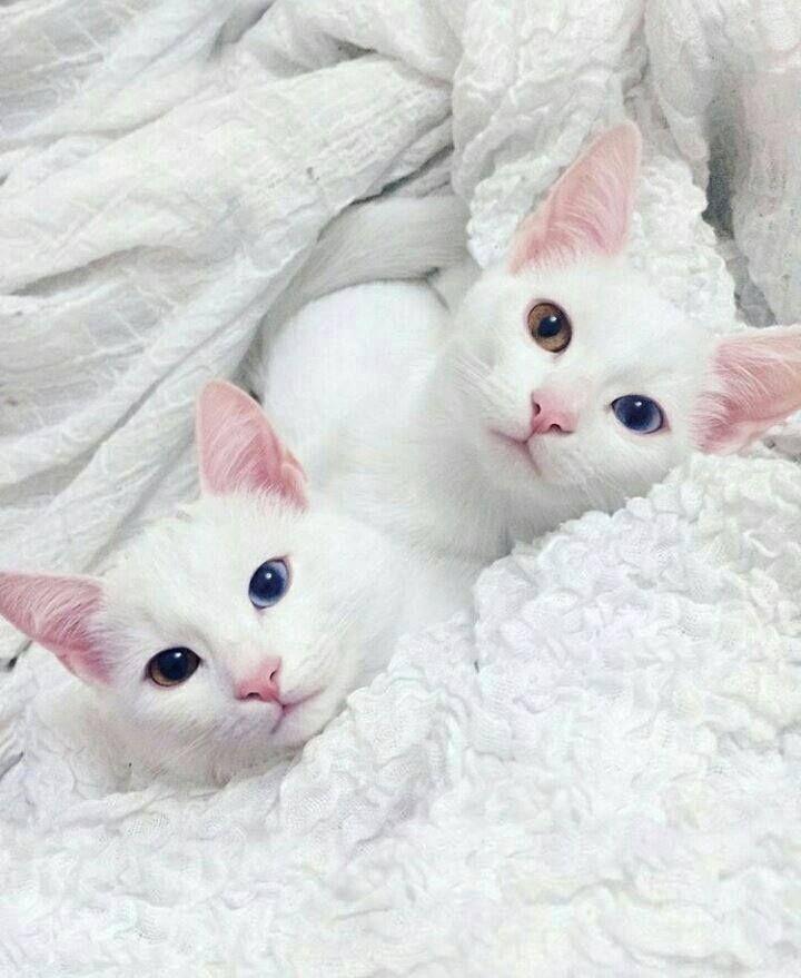 I love their eyes!