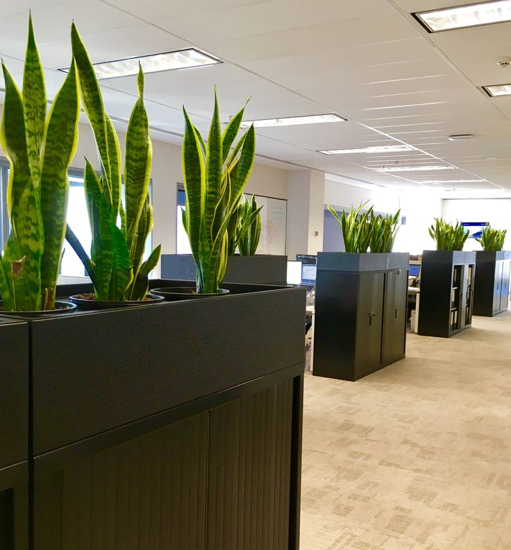 Atmosphy indoor plants / greenscaping  #indoorplants #officeplants #officedesign
