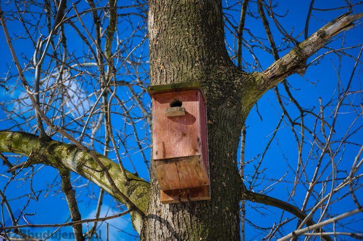 Budka dla ptaków wykonana i powieszona na drzewie przez dziadka Henryka - Alejka, Drzewo