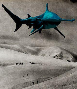 Silvio Severino: Tubarões Voadores, 2013