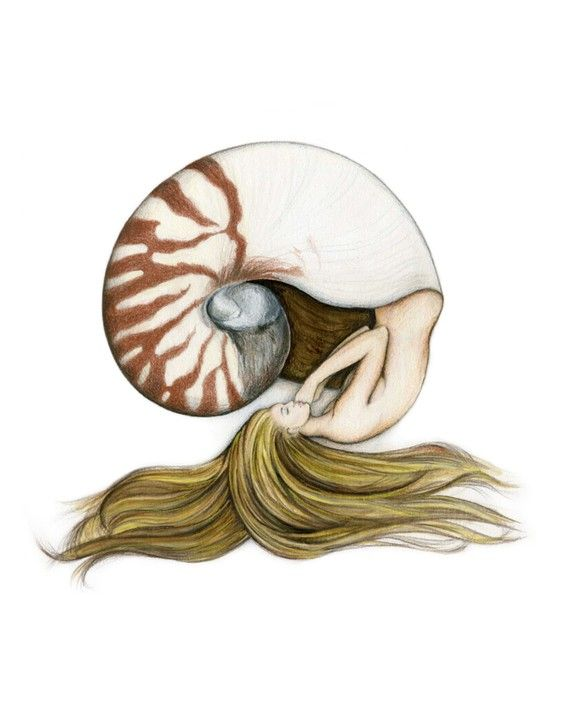 Nautilus Shell Mermaid Art Print by elvesfairies on Etsy, $20.00