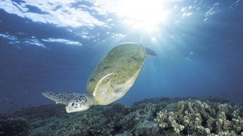 Carbono nos oceanos poderá atingir limiar catastrófico em 2100 – Observador