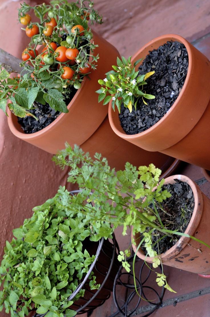 My potted vegie garden