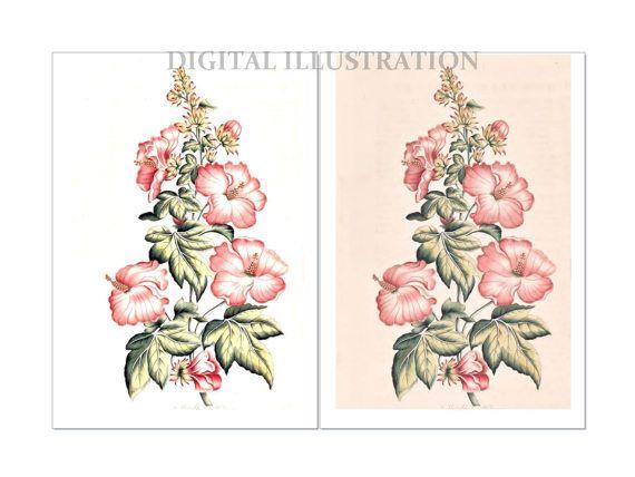 Botanical Illustration Digital Flower Image Retro Flower by BiSew
