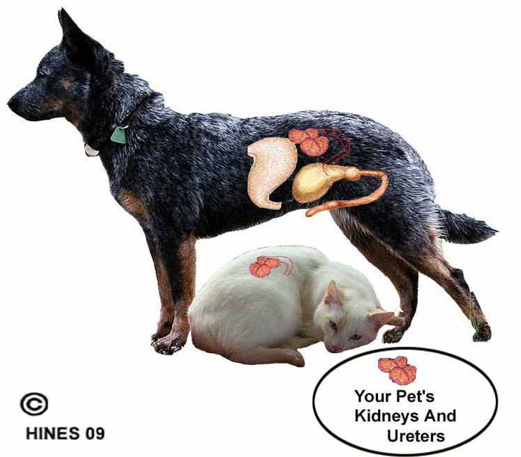 Best Food For Renal Failure In Cats