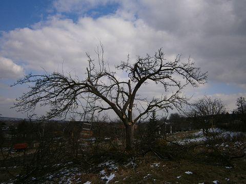 Jak ošetřovat staré ovocné stromy | potravinovezahrady.cz