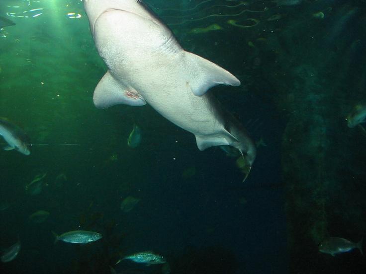 In the Tank... Melbourne Aquarium...