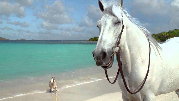 DIRECTV: Hannah Davis and Her Horse & Goat  #DIRECTV, #Grey