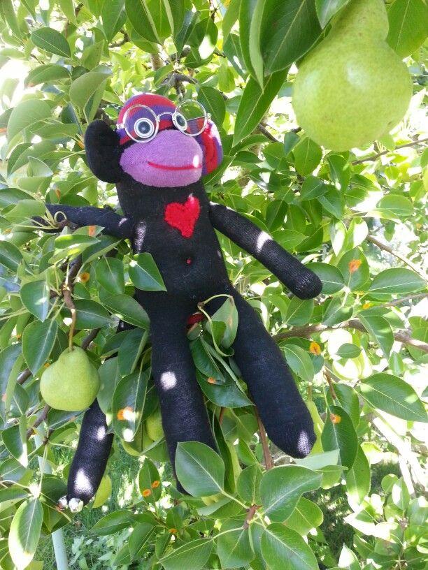Gingal the Rainbowbum Sock Monkey