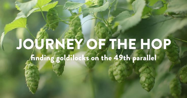 You'd never guess so much science goes into every pint of beer. Conditions for growing perfect hops.