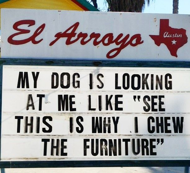 Dogs Are Straight Up Having A Great Time Right Now Order Food Or Margaritas For Pickup Or Delivery At The Link In Our Bio Elarroy Dad Humor Funny Signs Humor