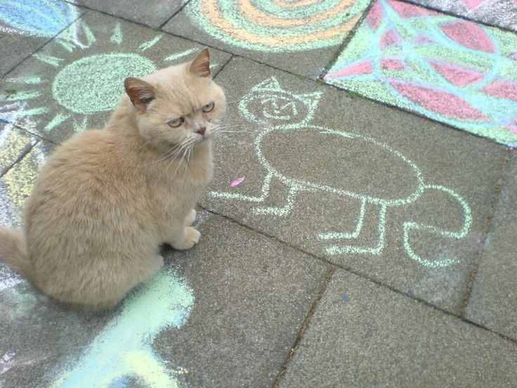 Cats don't appreciate sidewalk chalk art.