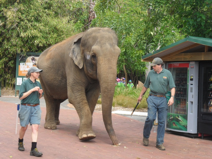 Perth Zoo, western Australia. This is Trisha, she's an old girl now (shes 50) & she's gorgeous.