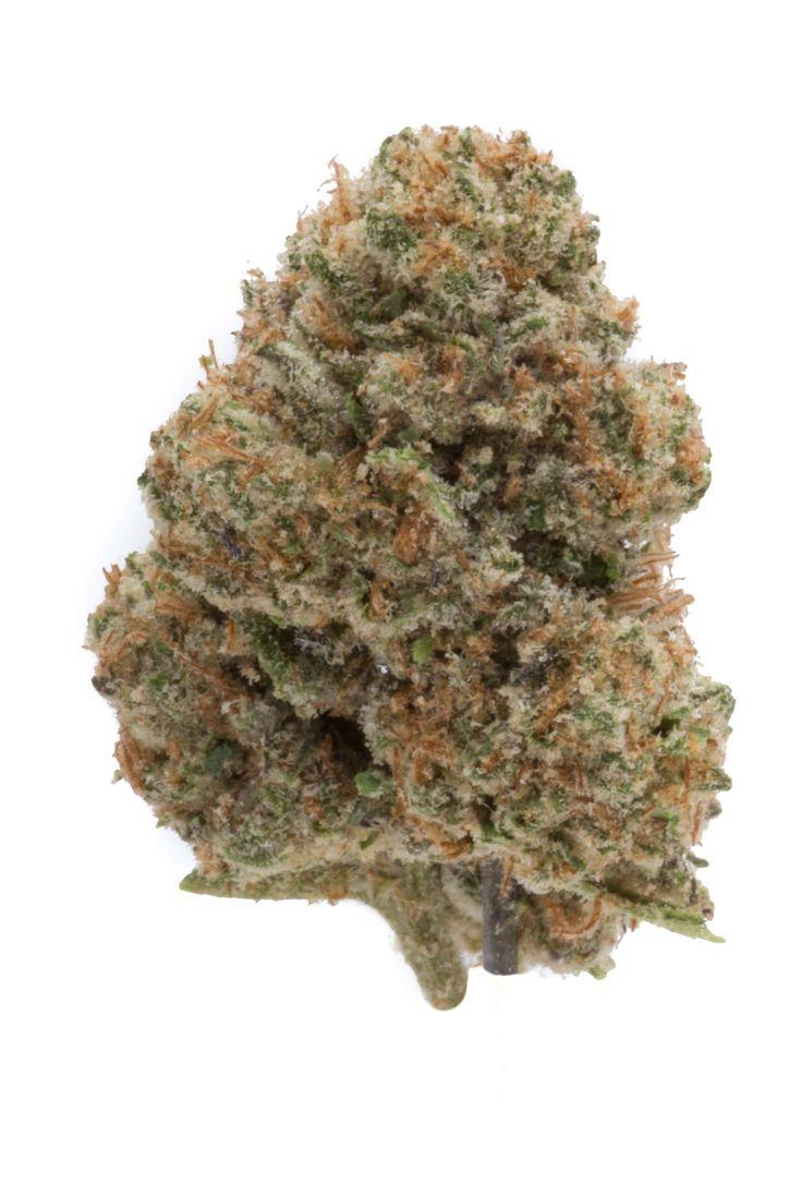 Cherry Pie #marijuana #cannabis #herb #green #greenman #greenmancannabis #marijuana #bud #nug #ganja #cultivate #grow #dispensary #denver #colorado